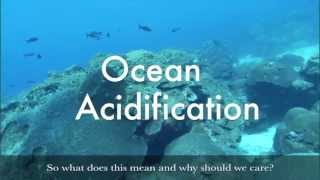 Making Waves podcast: Ocean Acidification