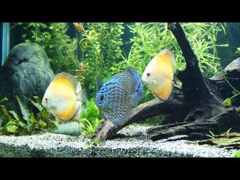 How to Clean Fish Tank Rocks | Aquarium Care