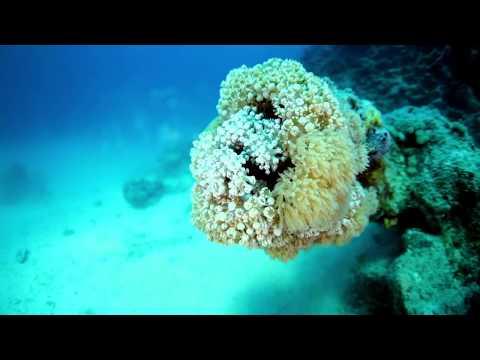 Saudi Arabia announces mega Red Sea tourism project
