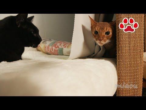 ん?黒猫のくろ【瀬戸の黒猫日記】Huh?Cute black cat Kuro