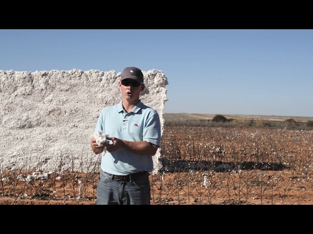 HomeGrown Cotton: Tagged, Tested, Trusted from Source to Shelf
