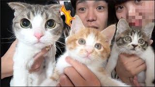 子猫の兄妹の親猫です。家族になります thumbnail