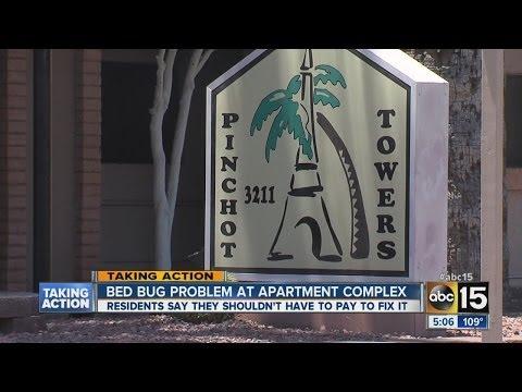Bed bug problem at Phoenix apartment complex