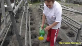 как высаживать томаты в открытый грунт.(Когда и как высаживать томаты в открытый грунт. Мой блог http://russian-fazenda.ru/ Тэги: Когда и как сеять помидоры..., 2016-05-30T19:05:47.000Z)