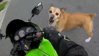 dog barking at bikes