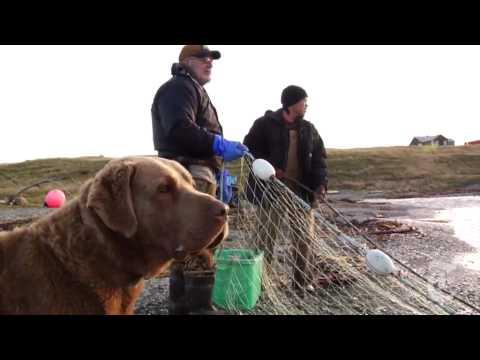 U.S.: An Alaskan Village in Crisis - nytimes.com/video