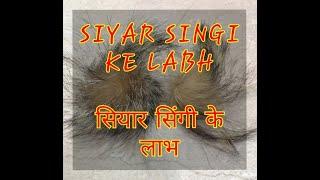 SIYAR SINGI KE LABH AUR FUNCTION. 9871987824