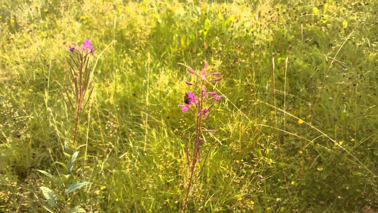 Kukat Ja Mehiläiset