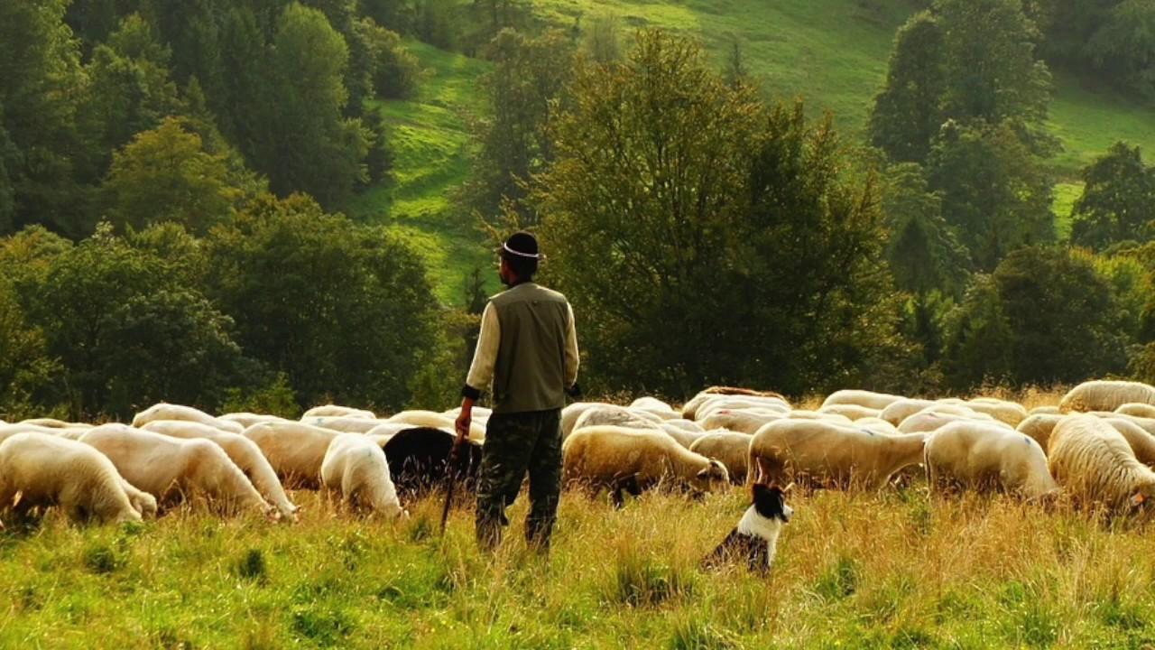 два пастуха картинки инстаграм привлекательные кадры