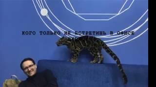 Леопард в гостях у HYDROP