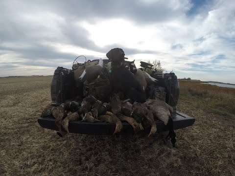 Duck Hunting: 2 man limit
