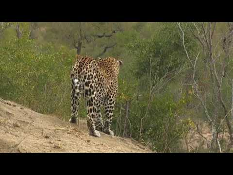 Sabi Sand Wild Safari Live June 13 2016 sunset