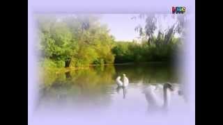 Летите лебеди, летите христианская песня