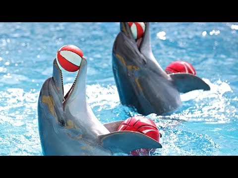25 Cool And Absolutely Extraordinary Dolphin Facts