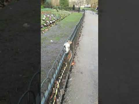 to feed squirrels in St James Park