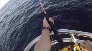 Video Alan Tani, Marla Sportfishing, Centaur, Makaira 16, 165 yellow fin tuna, 3/21/2017 download MP3, 3GP, MP4, WEBM, AVI, FLV Juni 2018