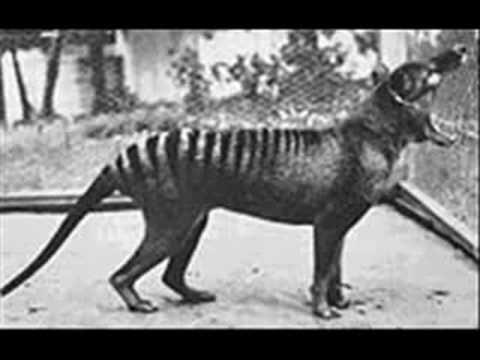 Extinct Animals 20th Century!