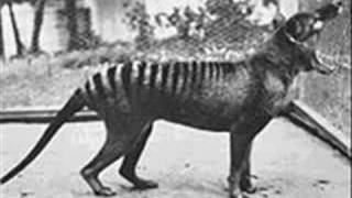 Extinct Animals 20th Century!
