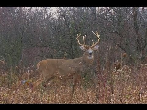 SHOT OF THE WEEK - Big Buck From A Ground Blind