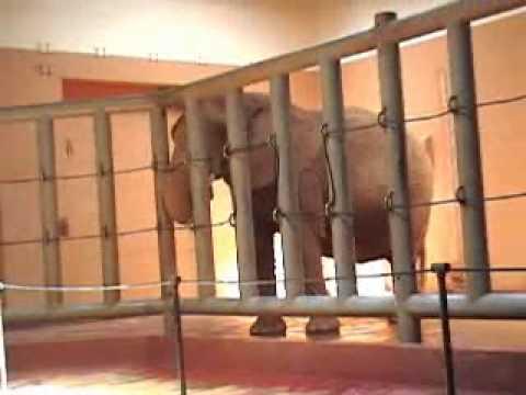Zoo Atlanta - May 7, 2005