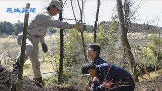 水戸藩2代藩主・徳川光圀が愛した山桜「桜川のサクラ」の苗木10本が19...