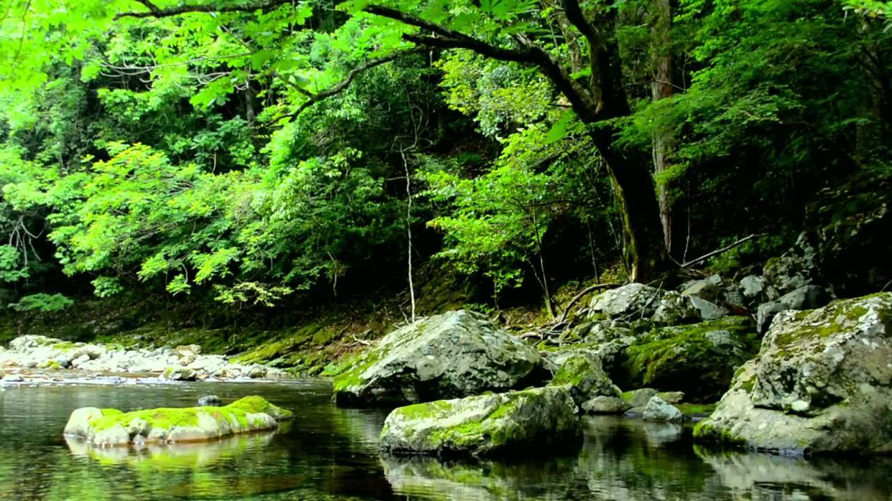 【自然音】せせらぎと野鳥のさえずり / Nature Sounds - Relaxing Sound of Water and Birdsong