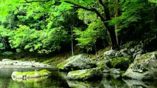 【自然音】せせらぎと野鳥のさえずり / Nature Sounds - Relaxing Sound of Water and Birdsong screenshot 3