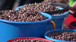 Красноярцы массово покупают кедровые орехи