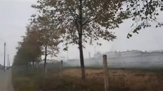 как приучают собак к выстрелу на улице зелёная кострома