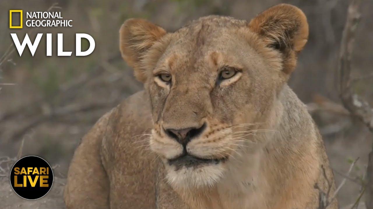 Safari Live - Day 271 | Nat Geo Wild
