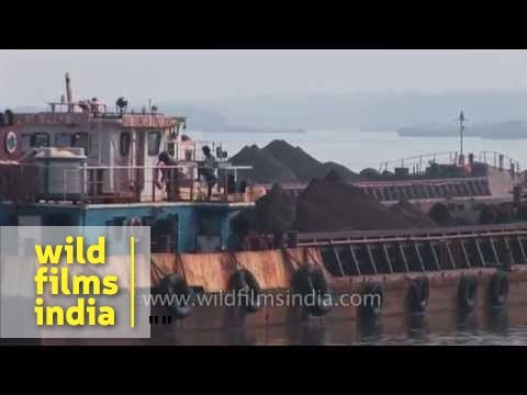 Iron ore being carried for export in a barge in Mandovi river , Goa