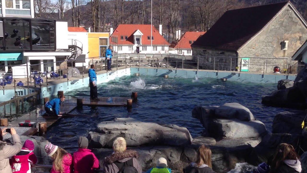 Bergen Aquarium Seal Feeding. - YouTube