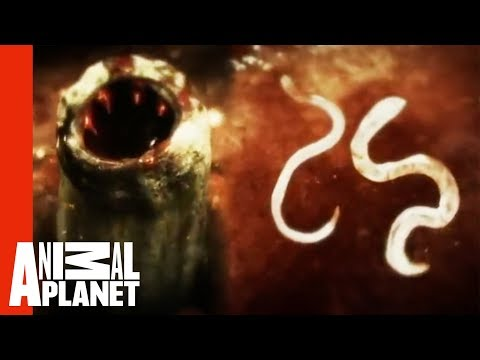 Killer Cat Scratch | Monsters Inside Me