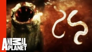 Killer Cat Scratch | Monsters Inside Me
