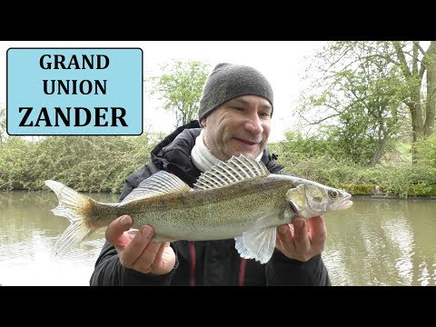 Dawn Session On The Grand Union Canal - Zander Fishing - 29/4/18 (Video 69)