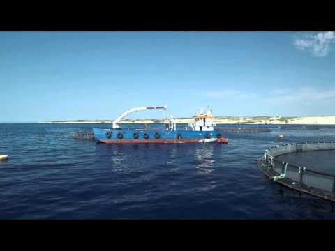 MFF Ltd: 20+ years of Fish Farming Experience in Malta