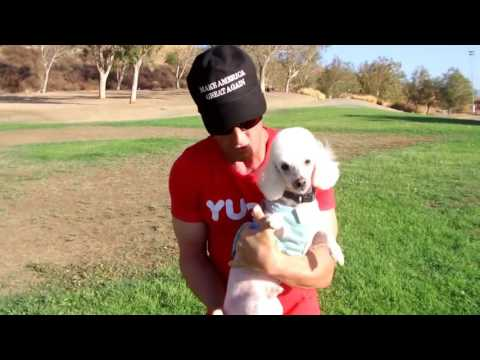 Dice the poodle personal trainer Your Videos