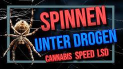 Das machen SPINNEN unter dem EINFLUSS VON DROGEN!!! 🕷