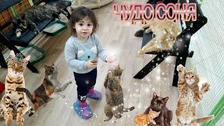 СОНЯ в КОРПОРАЦИИ КОШЕК!#веселое #детское видео! разные #кошки, от лысых до самых больших😀0+