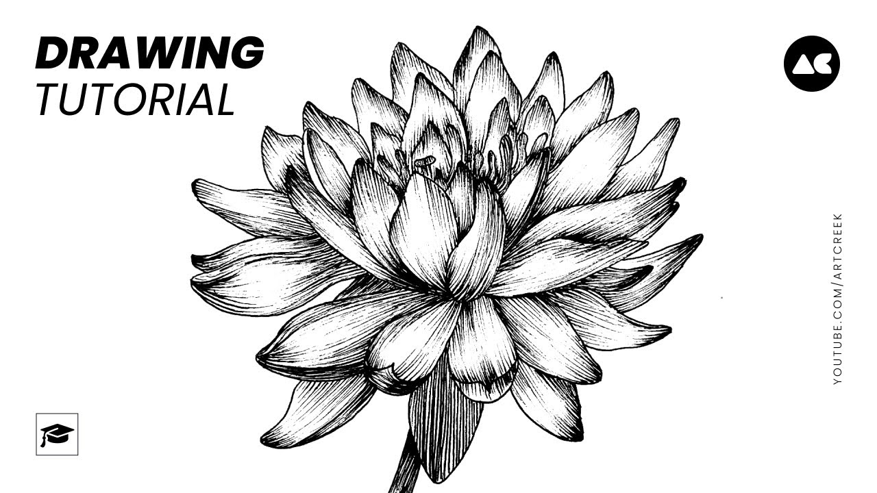 How To Draw A Simple Lotus Flower Drawing With Pen Art Creek Youtube