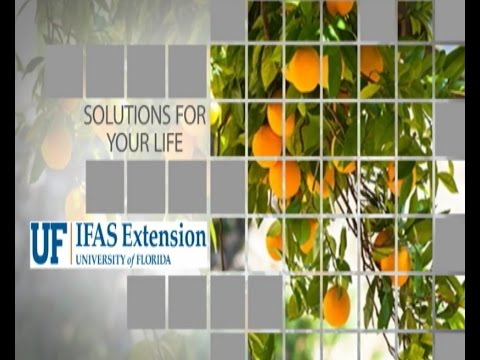 University of Florida/IFAS August 2016