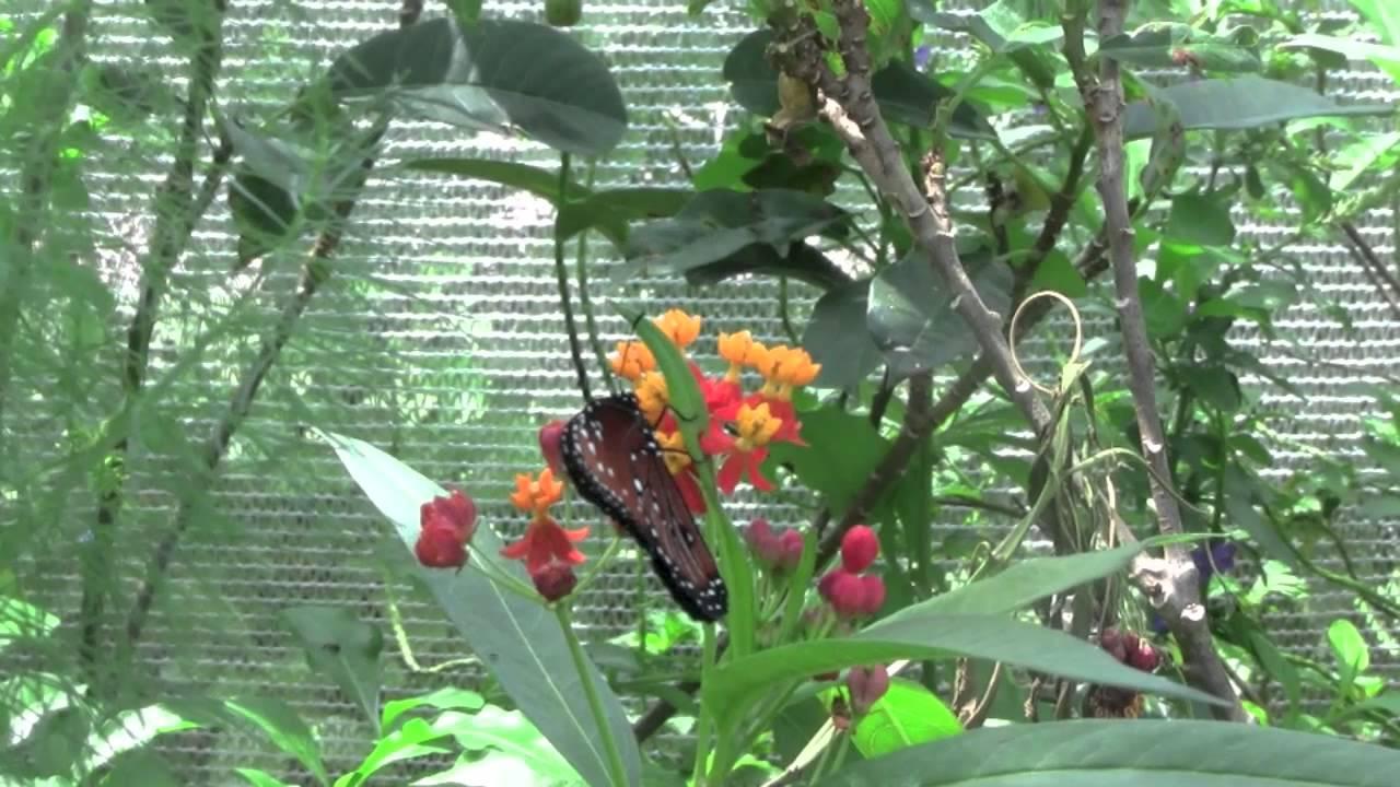 Butterfly Garden   YouTube