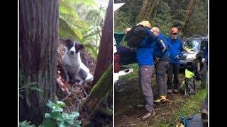 Едва был живой! Мужчину спасатели нашли только благодаря его преданной собаке