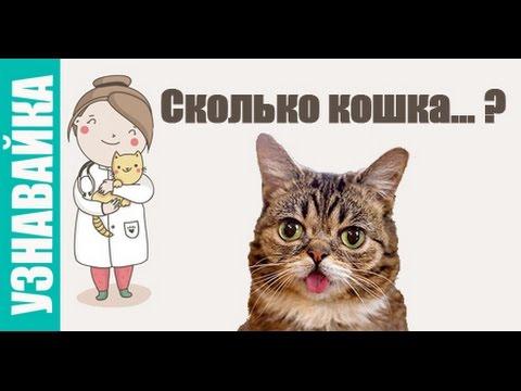 Сколько может продержаться кошка без еды??? [PDA