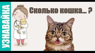 Сколько кошка ходит беременна, пьет воды и без еды. Узнавайка