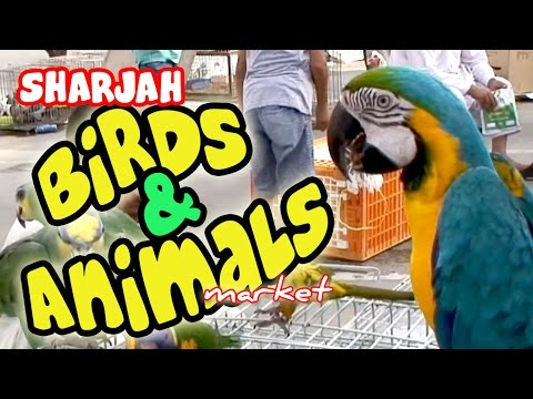 Sharjah Birds and Animals Market - Peacocks, Sugar Gliders, Rabbits, Parrots