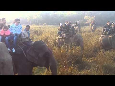 Trip to North East India | Assam | Meghalaya | Shillong | Cherrapunji | Kaziranga | Double Decker