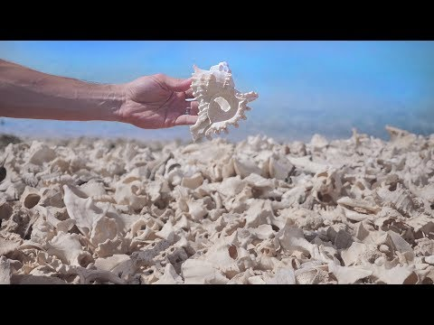 This Island In The Red Sea Is Covered in Shells?? | SAUDI ARABIA