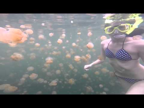Snorkeler Bravely Swims With Thousands Of Jellyfish