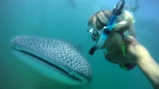 GoPro HD HERO camera: Holly Beck and the Whaleshark